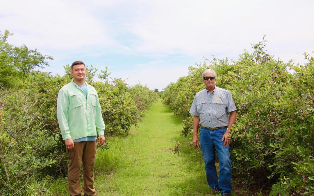 Best Blueberries in Texas