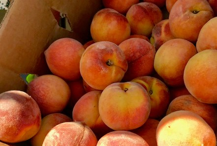 Best Texas Peaches In Forty Years